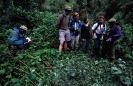 Tourists at Gorilla Nest Bwindi National Park